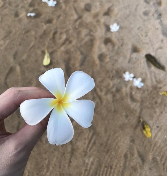 サヌールの朝日を見て海岸沿いを散歩